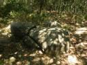 Un menhir degli antichi liguri